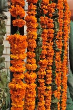 flowers-366345_1920